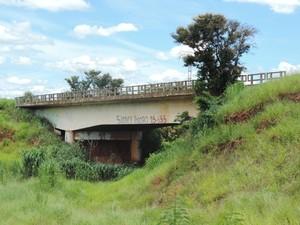 Ponte está tomada por mato e árvores (Foto: Marcos Lavezo/G1)