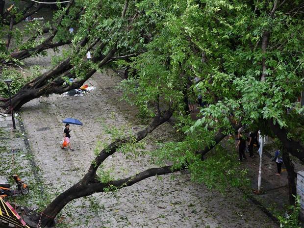 Mulher caminha entre árvores caída após passagem do tufão Nida por Shenzhen, província de Guangdong (Foto: Reuters)