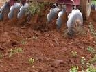 Chuva em boa quantidade, anima os agricultores de Sergipe