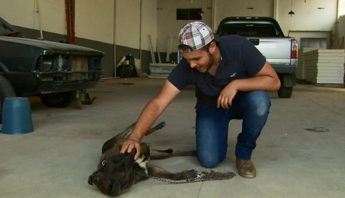 Cachorrinho que deu ajudadinha para a Caldense ganhou novo dono em Poços de Caldas (Foto: Reprodução EPTV)