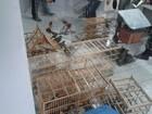 Operação apreende animais silvestres no Sertão da Paraíba