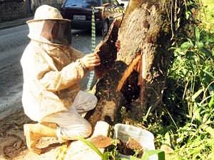 Atendimento de ocorrências com abelhas subiu 6% entre 2013 e 2014 (Foto: Divulgação/Corpo de Bombeiros do RN)