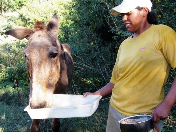 Burro Afonso chegou na ASPA Itu doente e em péssimas condições (Foto: Divulgação/ ASPA Itu)