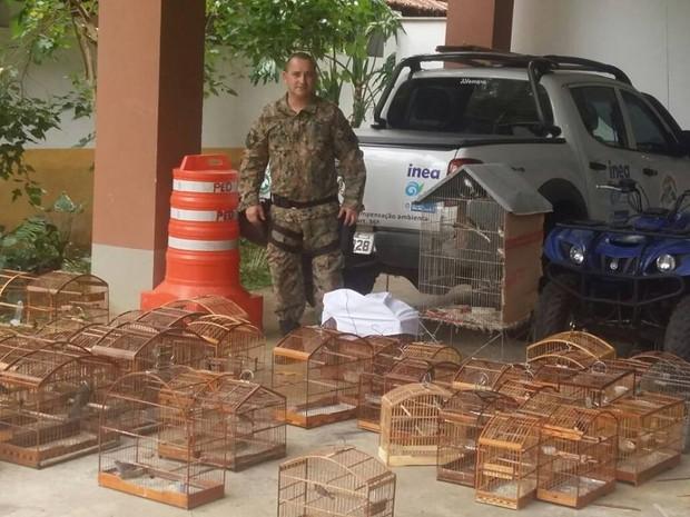 Animais foram apreendidos e serão soltos pelo Inea (Foto: Divulgação/Polícia Ambiental)