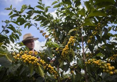 cultivos_perenes_fazenda_sustentavel (Foto: Marcelo Min )