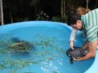 Ferido, peixe-boi recém-nascido é resgatado próximo a Parintins, no AM
