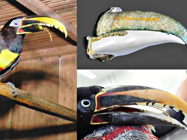 Imagem mostra o pássaro com o bico quebrado, a prótese e ele com o novo bico (Foto: Cícero Moraes/ Arquivo pessoal)