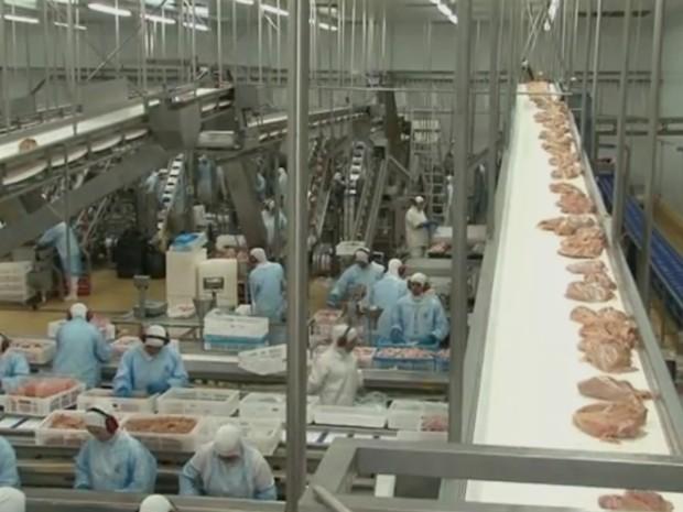 Paraná lidera exportações de frango no país e amplia geração de emprego (Foto: Reprodução/RPC)