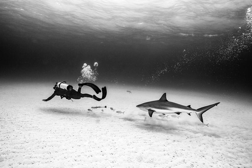 Tubarão-bico-fino/ Tiger Beach, Bahamas  (Foto: Foto: ©Michael Muller / Taschen / CPi Syndicatio)