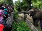 Elefanta estica tromba para receber dinheiro de turistas no Paquistão