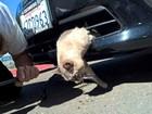 Veja gato que sobreviveu a atropelamento e mais bichos sortudos