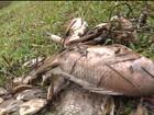 Centenas de peixes morrem de frio em parque de Curitiba, diz prefeitura