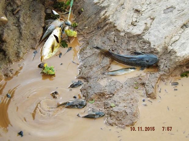 Mortandade tem mobilizado pescadores na tentativa de transferir peixes do rio contaminado para lagoas de água limpa  (Foto: Reprodução/BBC)