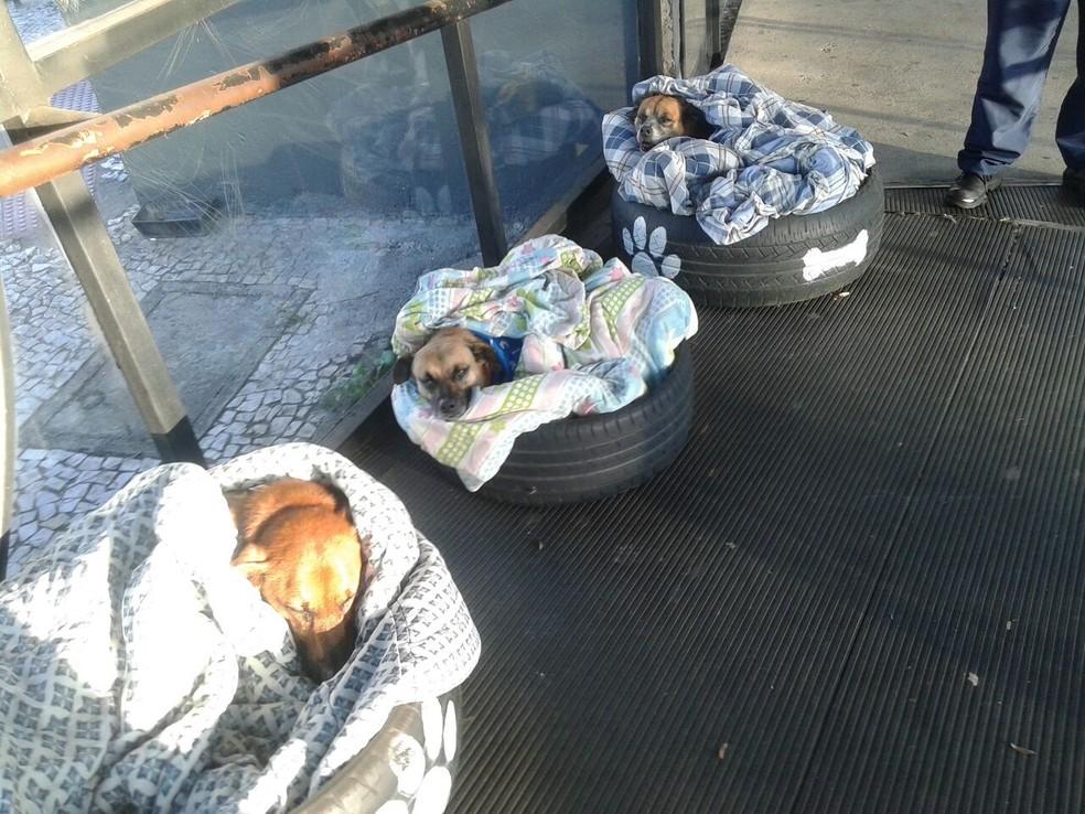Cães recebem cama improvisada para se proteger do frio em Curitiba  (Foto: Neusa dos Santos )