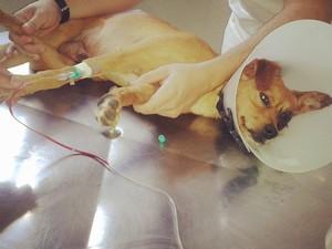 Após passar por 11 sessões de quimioterapia, animal se recuperou 100%. (Foto: Arquivo Pessoal/ Gracielle Moraes)