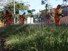 Após rompimento de contrato, serviço de capina é retomado em Porto Alegre