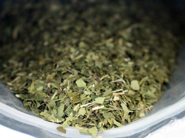 Produção de erva-mate caiu 94% em 11 anos, diz pesquisa (Foto: Gabriela Pavão/ G1 MS)