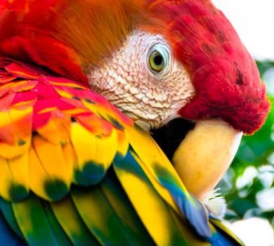 Arara na Amazônia (Foto: Helio Dias/ Flickr)
