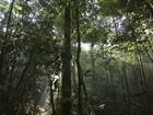 Estudo encontra vestígios humanos em áreas 'virgens' da floresta, no AM
