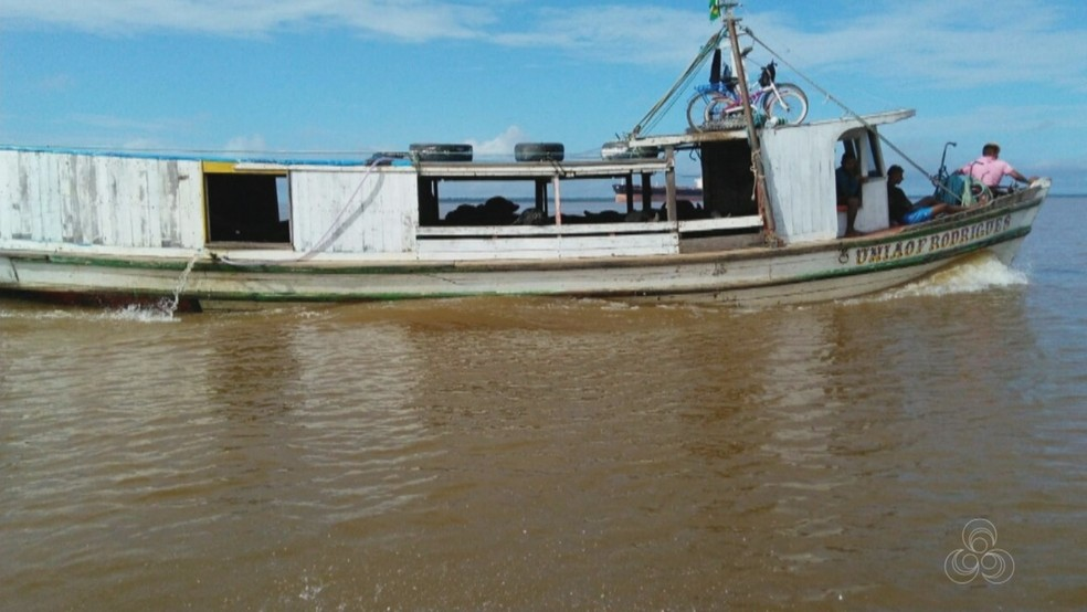 Embarcação conduzia 13 búfalos, que foram levados para um matadouro de Santana (Foto: Reprodução/Rede Amazônica no Amapá)