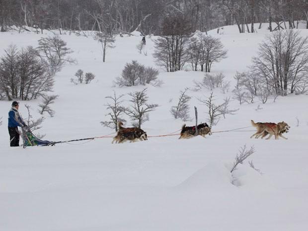 Brasileiro competiu com cães da raça Malamute do Alasca (Foto: Johnny Duarte/Divulgação)