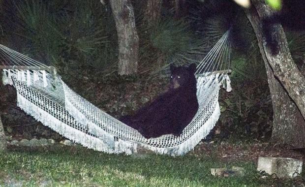 Urso-negro foi visto descansando em uma rede no jardim de uma casa em Daytona Beach (Foto: Rafael C. Torres/Reuters)