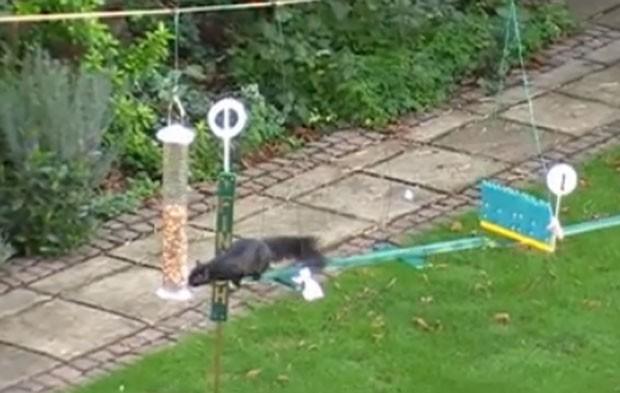 Esquilos tiveram que superar obstáculos para alcançar alimentador de pássaros (Foto: Reprodução/YouTube/Steve Barley)