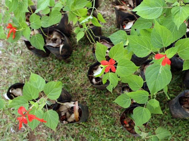 Natureza - 7 dicas para plantar uma horta em casa (mesmo