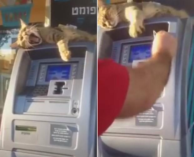 Felino utiliza a pata para impedir clientes de sacarem dinheiro (Foto: Reprodução/YouTube/Lolzing4gifs)