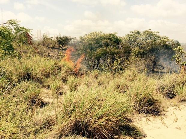 Fogo atingiu área de vegetação no Parque da Cidade (Foto: Michelle Rincón/Inter TV Cabugi)
