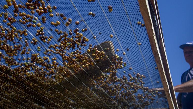 café_grãos (Foto: Rogerio Albuquerque / Editora Globo)