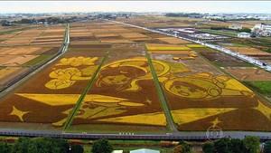 Obra de arte na plantação de arroz (TV Globo)
