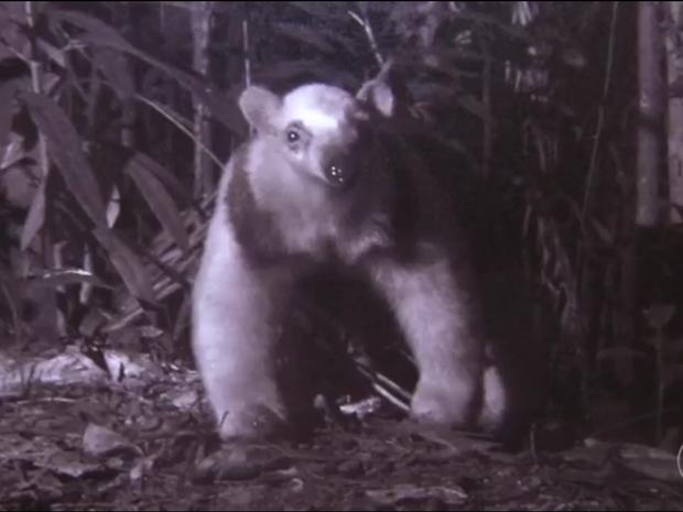 Exposição de fotos revela fauna do Parque Nacional do Itatiaia, que completará 80 anos em 2017 (Foto: Reprodução/TV Rio Sul)