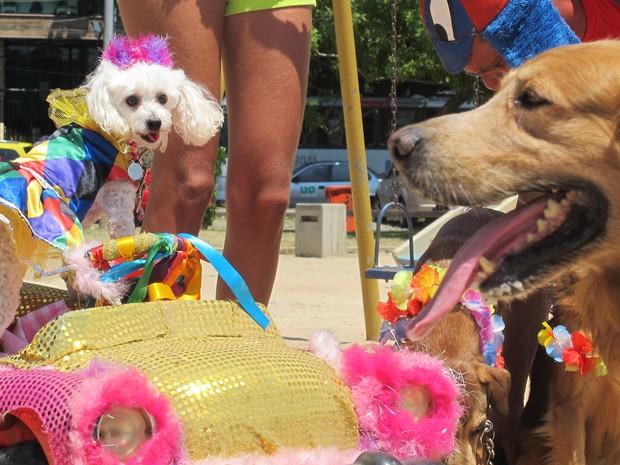 A colombina Kitty observa o labrador Moleque. Os dois cachorros são presença certa no Blocão, que desfila em março na Barra da Tijuca, Rio (Foto: Gabriel Barreira/G1)