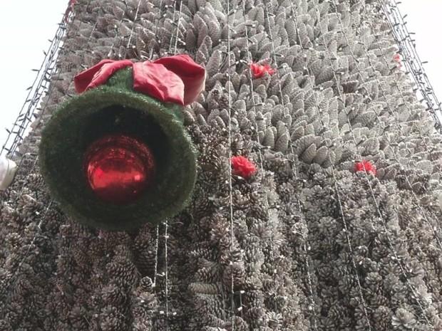 Ideia é inscrever árvore no Guinness Book, livro dos recordes (Foto: Reprodução/TVTEM)