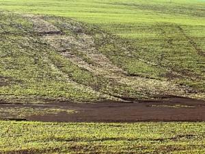 Granizo e geada tem provocado prejuízos para os produtores (Foto: RBSTV/Reprodução)