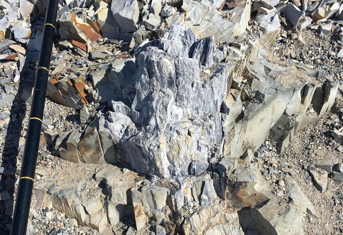 Um dos fósseis descobertos na Antártida (Foto: Reprodução/Twitter)