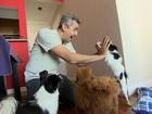 Aplicativo reúne tutores de cachorros com pessoas que podem cuidar deles