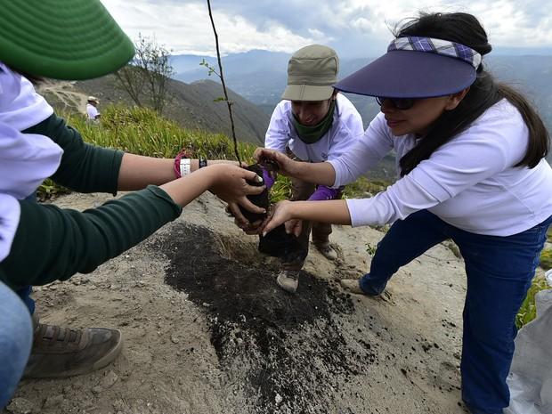 Voluntários participaram de reflorestamento na cidade de Catequilla, no Equador, neste sábado (16) (Foto: Rodrigo Buendia/AFP)