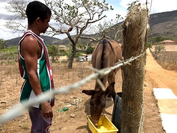 """Ademário dá farelo de milho e água em um tonel a seu cavalo """"Chocolate"""" (Foto: Alan Tiago Alves/G1)"""