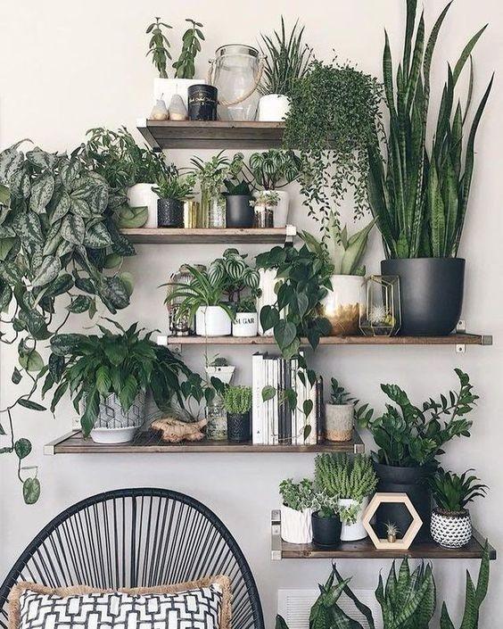 Plantinhas em casa (Foto: Reprodução / Pinterest)