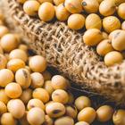 Exportação de soja deste ano  já supera 2016