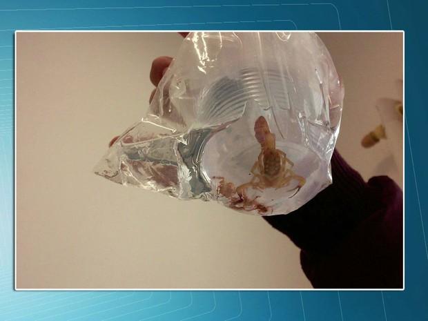 Fiscais encontraram um escorpião no meio da merenda (Foto: TV Globo/Reprodução)
