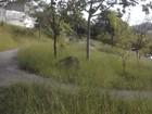 Internauta registra abandono de Parque Morumbi em Mogi das Cruzes