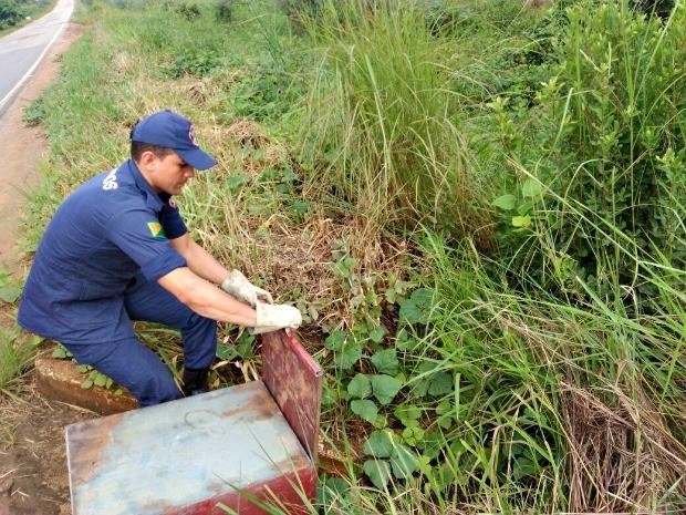 Bombeiros soltaram animal em área de mata (Foto: Divulgação/Corpo de Bombeiros de Sena Madureira)