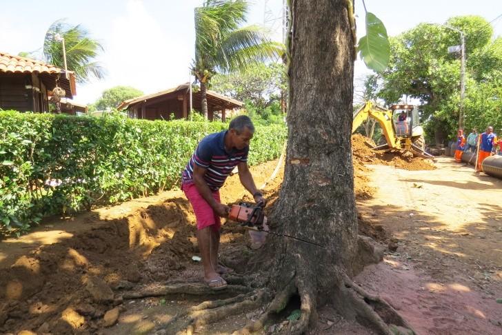 Remoção árvore