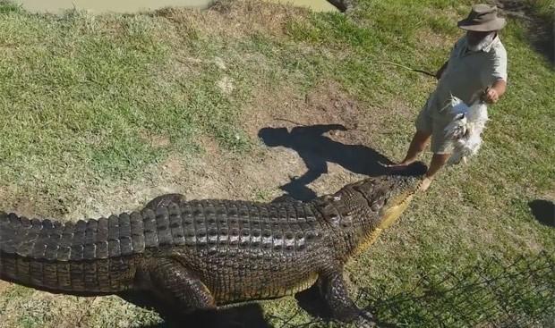 Rob Bredl cria oito crocodilos adultos (Foto: Reprodução/YouTube/ViralHog)