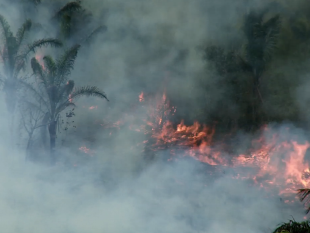 Incêndio na Terra Indígena Caru, no Maranhão (Foto: Survival International)