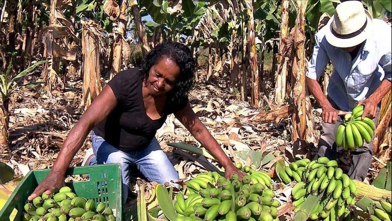 cooperativa-produtores-banana (Foto: Reprodução/TV Globo)