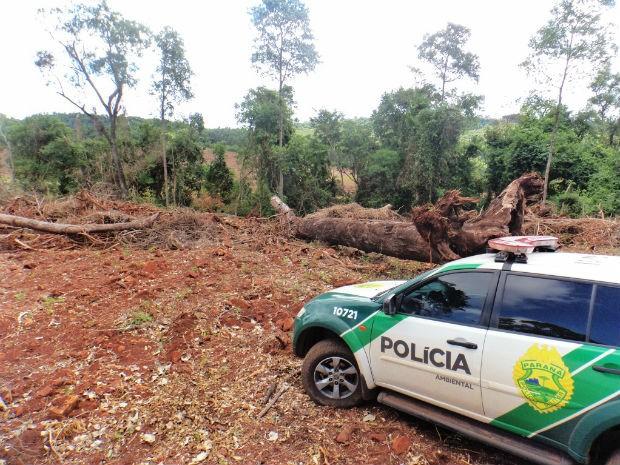 Em Capanema, foram 12 mil metros quadrados desmatados (Foto: Polícia Ambiental/ Divulgação)